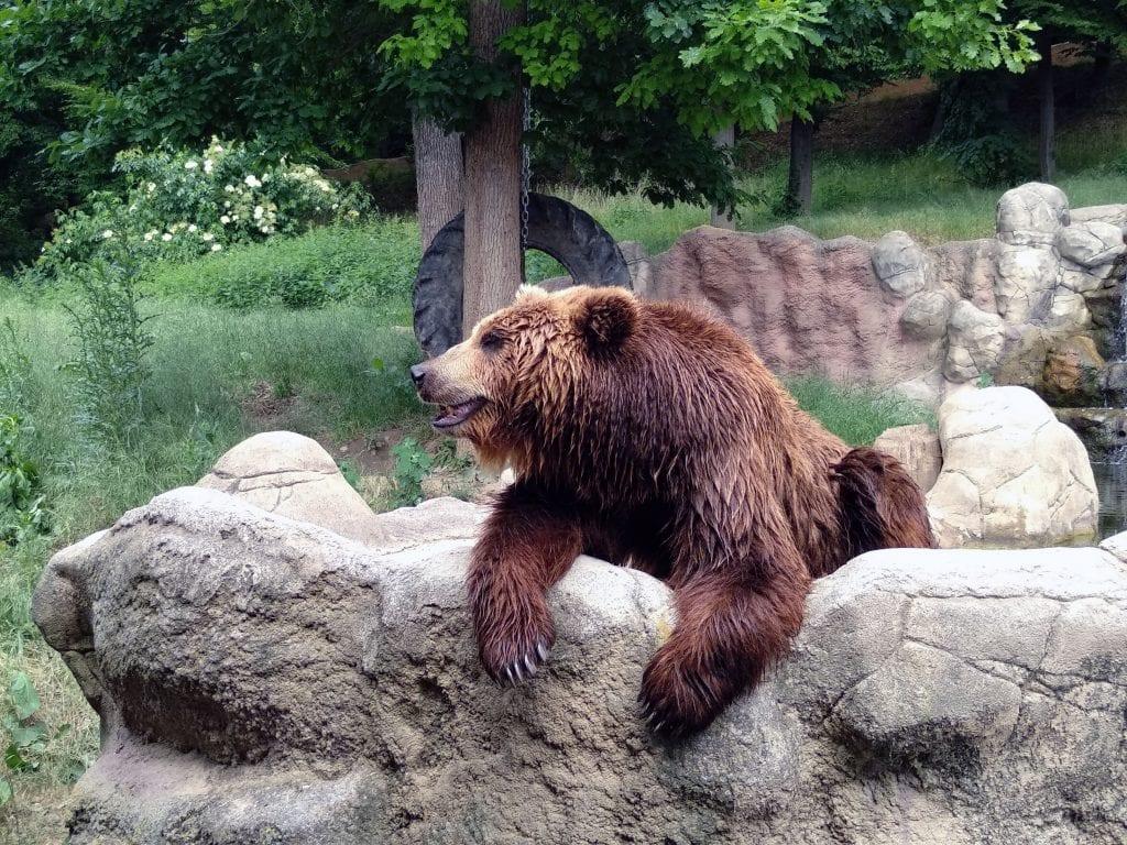 Na blízko medvědů kamčatských. Bude vás dělit jen několik metrů.