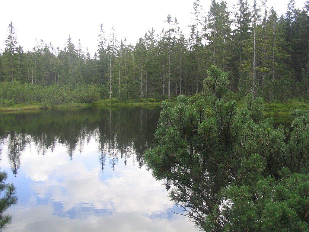 Bavorský les má i vodní plochy