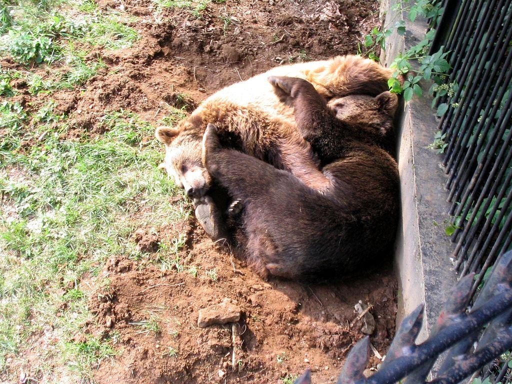 Spatřit můžete také medvědy