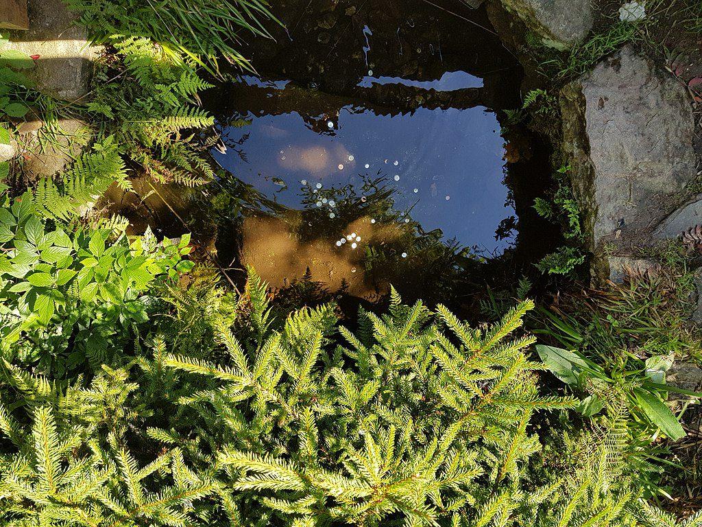 Vltava má prameny na šumavské Kvildě.