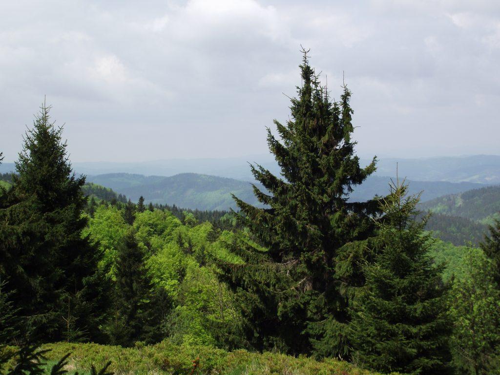 Lesy vás provází téměř na každém kroku.