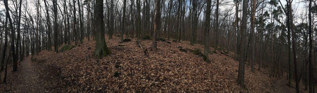 Celý kopec je zalesněný, povětšinou listnatými stromy.